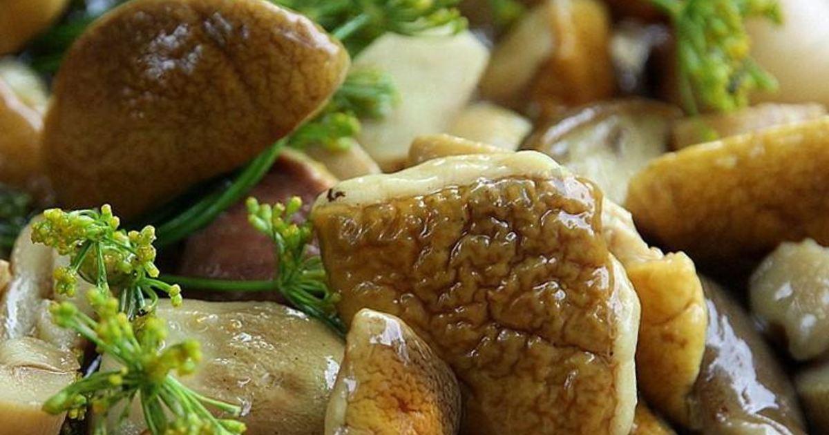 Блюда из белых грибов рецепты с фото